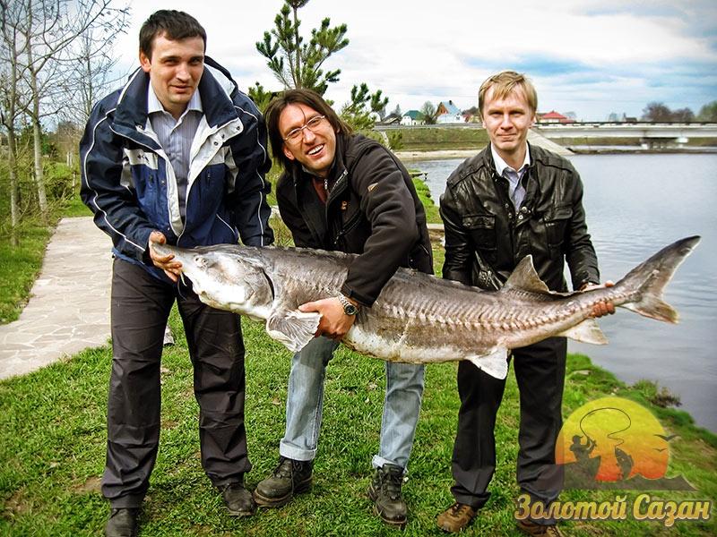 рыболовный сайт белуга