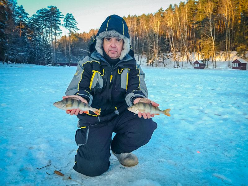 ловля окуня и судака зимой