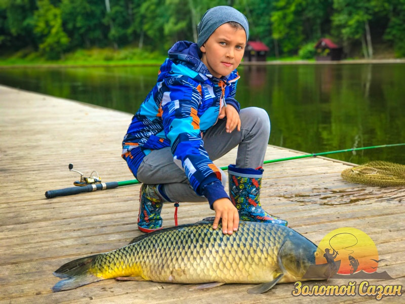 рыбалка в золотом сазане видео